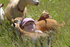 Girl and Her Goats Royalty Free Stock Photos