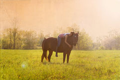 Girl and her horse Royalty Free Stock Images