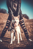Girl and her husky dog outdoor in the forest Stock Image