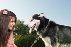 Girl and her husky Stock Image