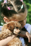 Girl and her little friend. The girl and the puppy of a toy poodle Royalty Free Stock Photos