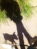 A girl and her puppy cast shadows. Shadows created by  a young girl in boots walking her puppy dog held by a lead while passing a spiky green plant Royalty Free Stock Image