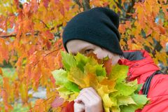 The girl hid in the maple leaves on the background of autumn royalty free stock image