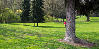 Girl hides behind a tree Stock Photo