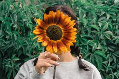 Girl hides her face behind a sunflower. stock images