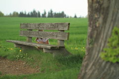 Girl hiding behind a bench. Lttle girl hiding behind a wooden bench Royalty Free Stock Photos