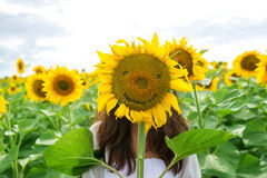 Girl is hiding behind a sunflower in a field Stock Photos