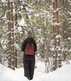 Girl hiking through Forest in Winter Stock Image