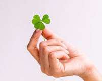 The girl hold  Clover leaf . Stock Images