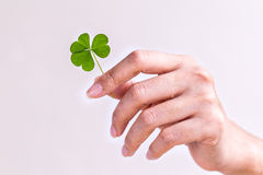 The girl hold  Clover leaf . Stock Photography