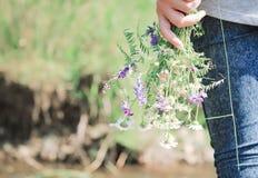 Girl holded chamomile stock photo