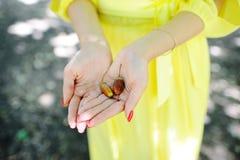 Girl holding acorns Stock Photos