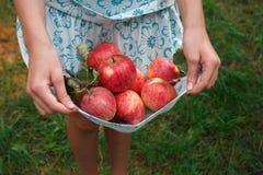Girl holding apples in skirt hemline. Unrecognizable girl holding apples in hemline. Child`s hands pick red ripe fruits in skirt on green grass background stock images
