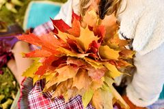 Girl holding beautiful autumn bouquet royalty free stock photo