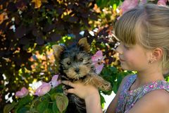 Girl Holding Black and Brown Short Coated Dog Royalty Free Stock Image