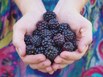 Girl holding black raspberries Stock Photo