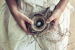 Girl Holding Blue Speckled Egg in Bird Nest on Lap. Vintage toned closeup of girls hands holding a wild bird nest containing a blue and brown speckled egg. Soft stock photography
