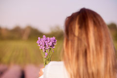 Girl  holding a bouquet of fresh lavender in lavender field. Girl hand holding a bouquet of fresh lavender in lavender field Royalty Free Stock Photos