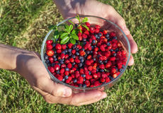 Girl holding a bowl of berries Royalty Free Stock Image