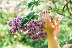 Girl holding a branch of lilac Royalty Free Stock Images