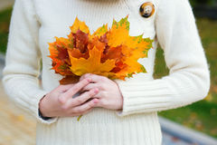 Girl holding a bunch of autumn leaves in her hands Royalty Free Stock Images