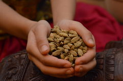 Indian girl holding cardamom pods in her hands Royalty Free Stock Image