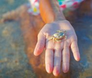 Girl holding crab Royalty Free Stock Images