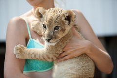 Girl holding cute lion cub in her hands Stock Images