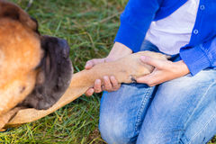 Girl holding a dog paw Stock Photo
