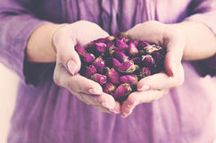 Girl holding dried rosebuds in her hands Royalty Free Stock Photo