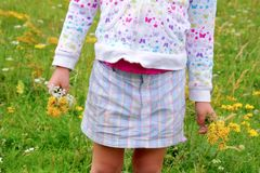 Girl holding flowers in hand green meadow stock image