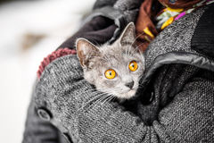 Girl holding a gray cat fire rescue Royalty Free Stock Image