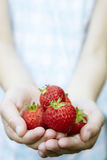 Girl Holding Handful Of Strawberries royalty free stock photography