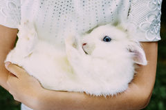 Girl Holding In Hands Her Pet White Rabbit With Royalty Free Stock Images