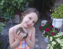 The girl is holding a hedgehog royalty free stock image