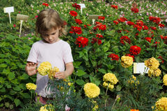 Girl holding in her hand yellow flower Stock Photo