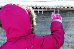Girl holding icicles in winter coat and gloves Royalty Free Stock Image