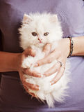 Girl holding kitten Stock Photos