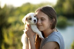 A girl holding a labrador puppy and smiling. At sunset in the forest in summer. The concept of friendship, happiness, joy and stock photos