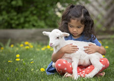 Girl holding lamb. Young, Asian-American girl holding a baby lamb Royalty Free Stock Image