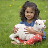 Girl holding lamb. Young, Asian-American girl holding a baby lamb Stock Photo