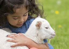 Girl holding lamb. Young, Asian-American girl holding a baby lamb Stock Photos