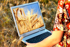 Girl holding a laptop in arms in wheat chain. Beautiful nature Royalty Free Stock Photo