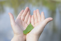 Girl holding a leaf in natural environment Royalty Free Stock Photography