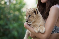 Girl holding little lion cub in her hands Royalty Free Stock Image