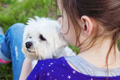 Girl holding maltese dog Stock Photo