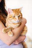 Girl holding orange tomcat Royalty Free Stock Image