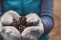 Girl holding pine tree cones in woolen mittens, close up Stock Image