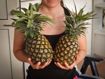 Girl holding pineapples Stock Images