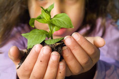 Girl holding plant Stock Image